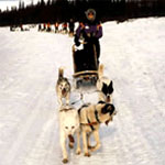 Rona Cant - Secretary on a Dog sledding trip in the Arctic